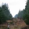 Skovvej i klitplantage