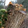 Stub med svampe